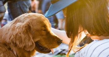 Allergiefreier Hund Ratgeber