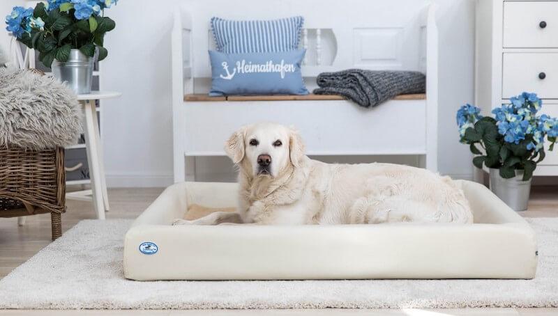 Aufblasbares Hundebett Test