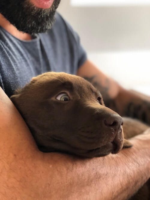 Hund Gewöhnung an den Tierarzt