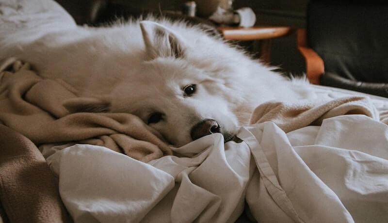 Hund aus Bett verbannen
