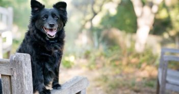 Hund bestrafen Ratgeber