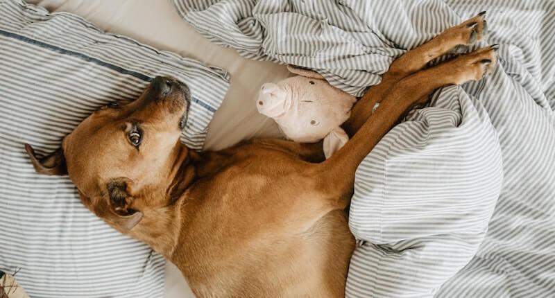 Hund das Bett abgewöhnen