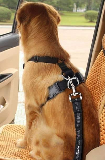 Hund im Auto transportieren Rechtliches