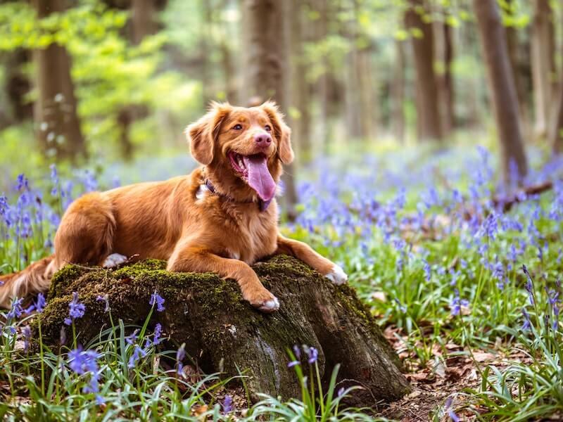 Hund sitzt auf Stein