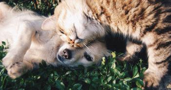 Hund und Katze Ratgeber und Tipps