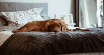 Hunde im Bett Ratgeber Tipps