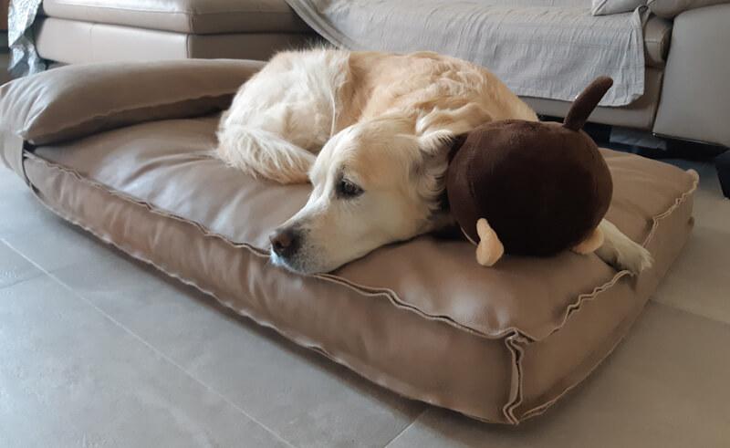 Hundebett Leder Test