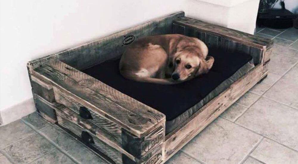 Hundebett XXL Test und Ratgeber
