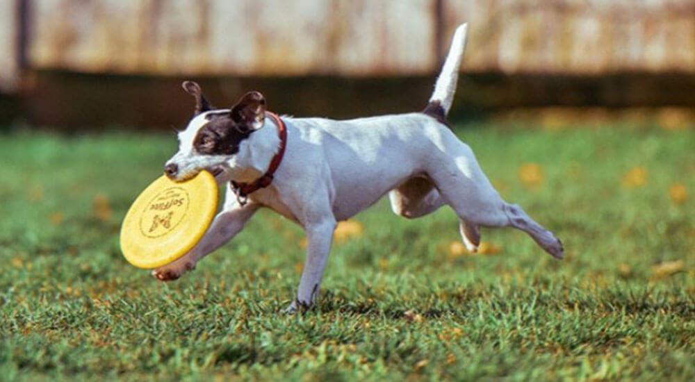 Hundefrisbee Test und Ratgeber