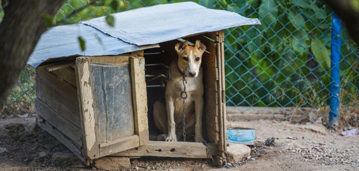 Hundehütte selber bauen Anleitung