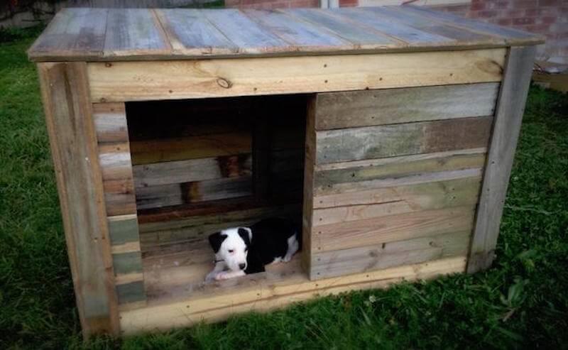 Hundehütte selber bauen Tipps