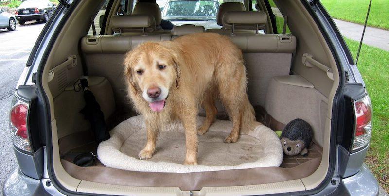 Hundekissen fürs Auto Ratgeber