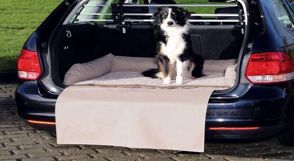 Hundekorb Auto Test und Ratgeber