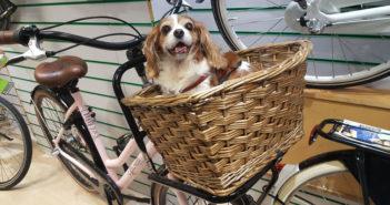 Hundekorb Fahrrad Test und Ratgeber