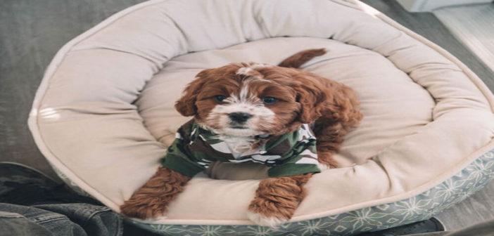 Hundekorb Test und Ratgeber