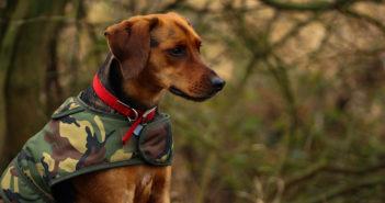 Hundemantel Test und Ratgeber