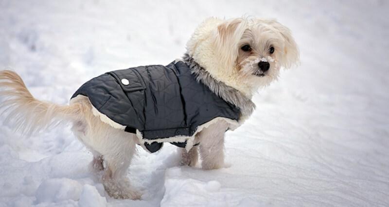 Hundemantel Winter Ratgeber