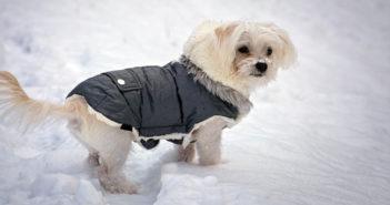 Hundemantel im Winter Test und Ratgeber