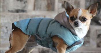 Hundemantel mit Geschirr Test und Ratgeber