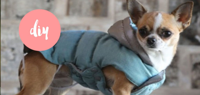 Hundemantel selber machen Tipps