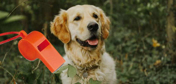 Hundepfeife Test