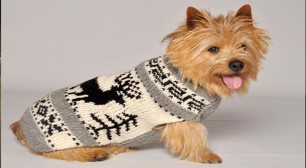 Hundepullover kaufen Ratgeber