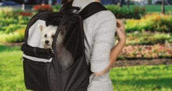 Hunderucksack Test und Ratgeber