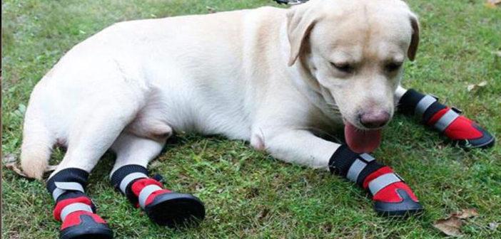 Hundeschuhe Test