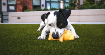 Hundespielzeug für große Hunde Test