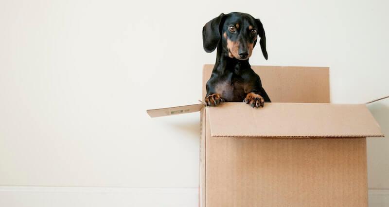 Hundetransportbox Ratgeber