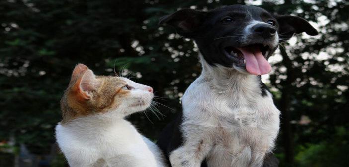 Katze-und-Hund-halten-Tipps