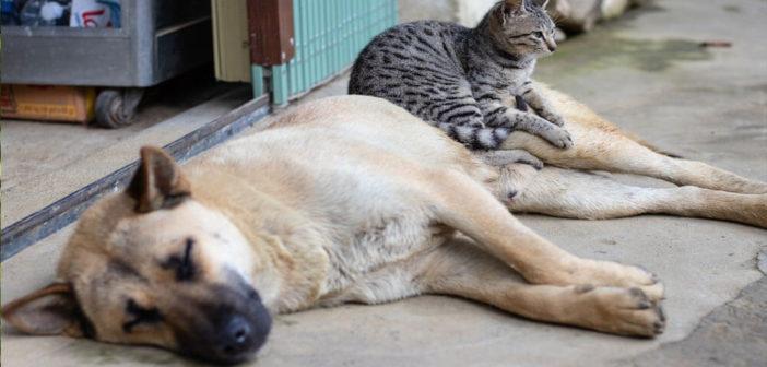 Katzen-an-Hund-gewöhnen-Ratgeber-und-Tipps