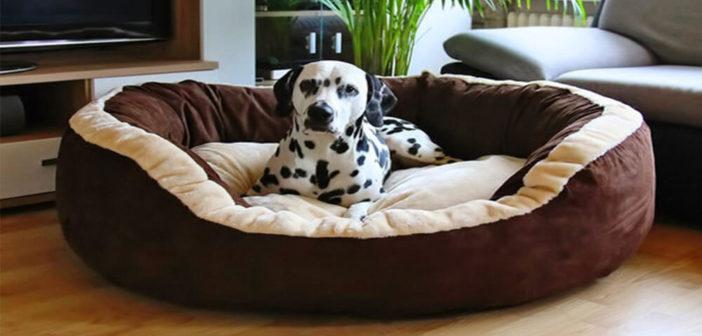 Knuffelwuff Hundebett Test und Erfahrungen