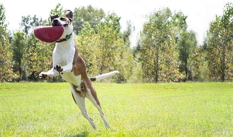 Kong Frisbee Flyer Hundespielzeug