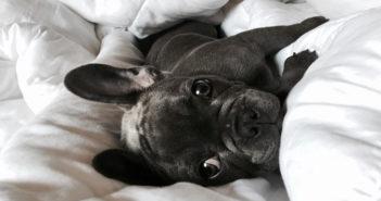 Orthopädisches Hundebett Test und Ratgeber