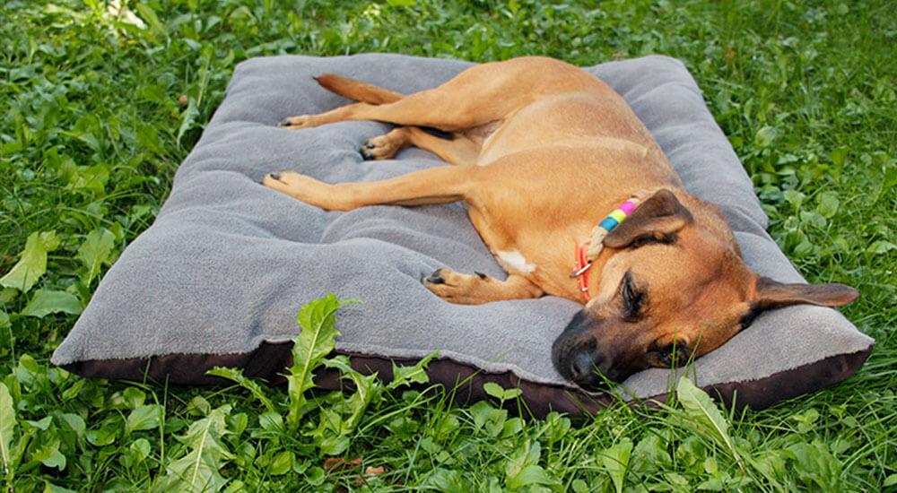 Outdoor Hundekissen Test