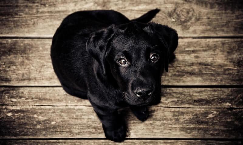 Süßer Hundewelpe