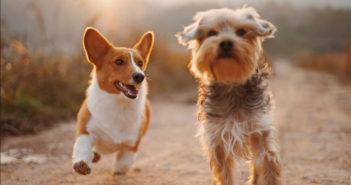 Schöne Hundenamen von A-Z