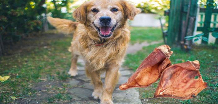 Schweineohren für Hunde Test