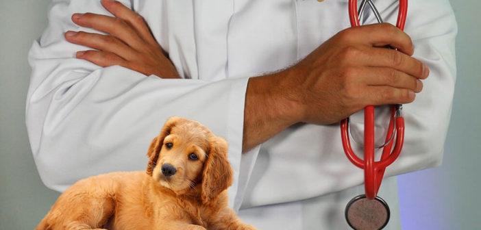 Tierarztangst beim Hund Ratgeber