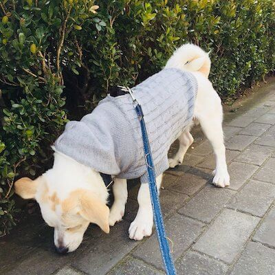 ubest Hundepullover gestrickt