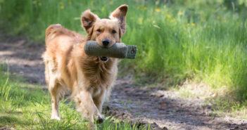 Apportieren mit dem Hund Ratgeber und Tipps