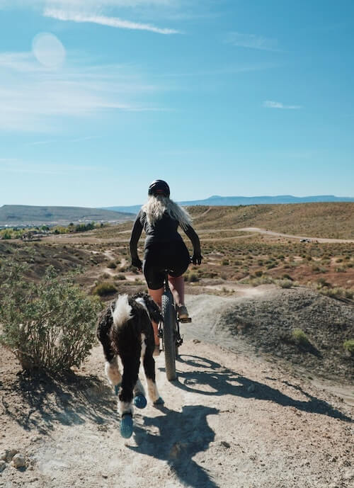 Ausrüstung zum Fahrradfahren mit Hund