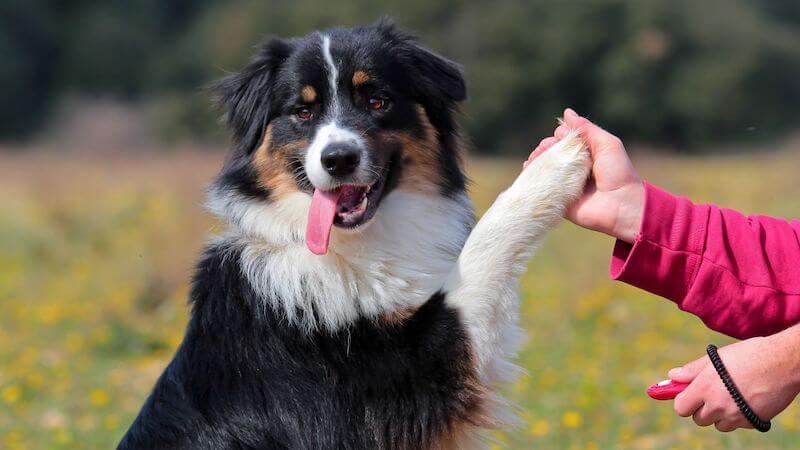 Clicker-Training Hund Erfahrungen