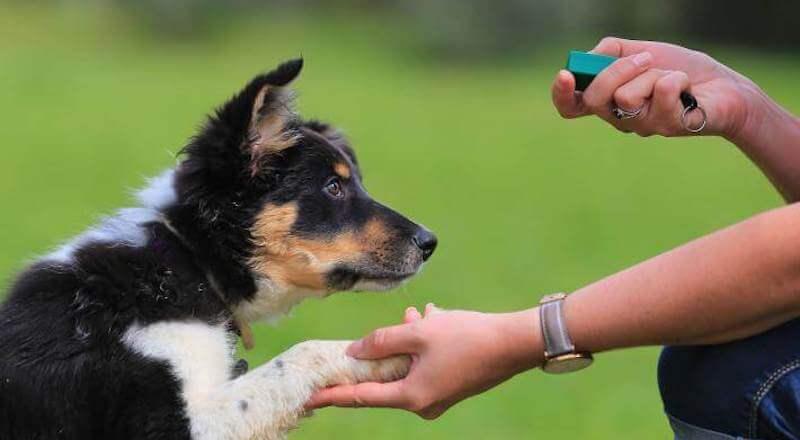 Clicker-Training Hund Ratgeber