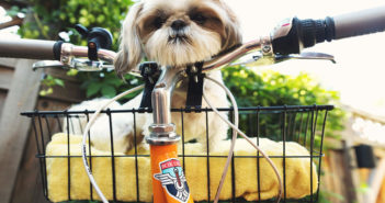 Fahrradfahren mit Hund Ratgeber und Tipps
