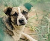 Flöhe beim Hund: Ratgeber, Tipps und Abhilfe