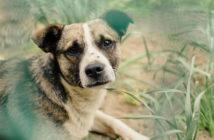 Flöhe beim Hund Ratgeber Tipps