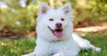 Gehörlosen Hund erziehen