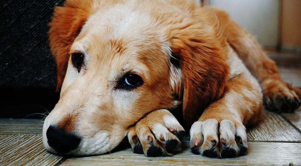 Hautkrankheiten beim Hund